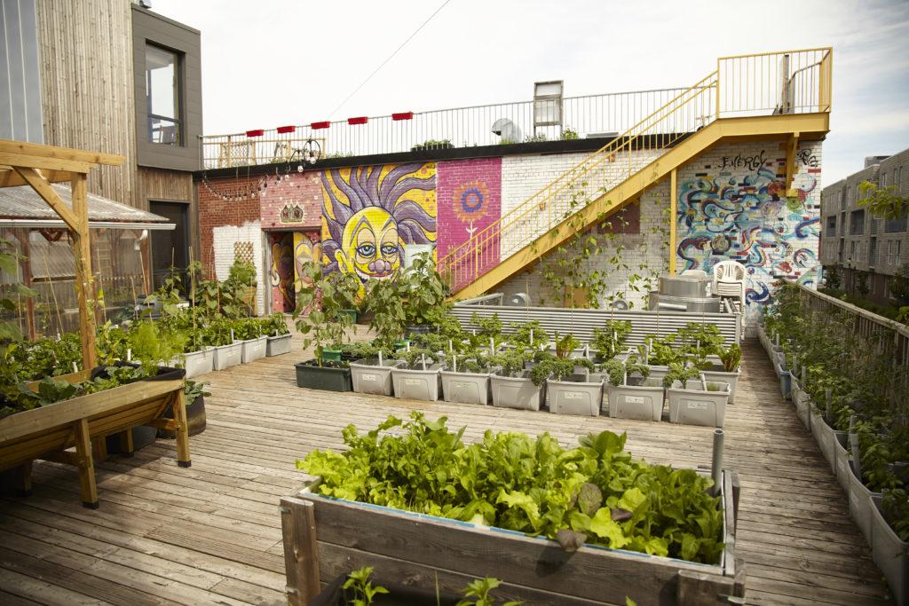 Santropol Roulant rooftop garden